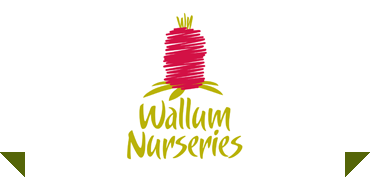 Wallum Nurseries