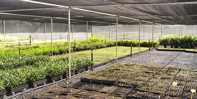 Wallum Nurseries - Wholesale Nursery Brisbane   Wholesale
