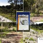 Mungarra Reserve